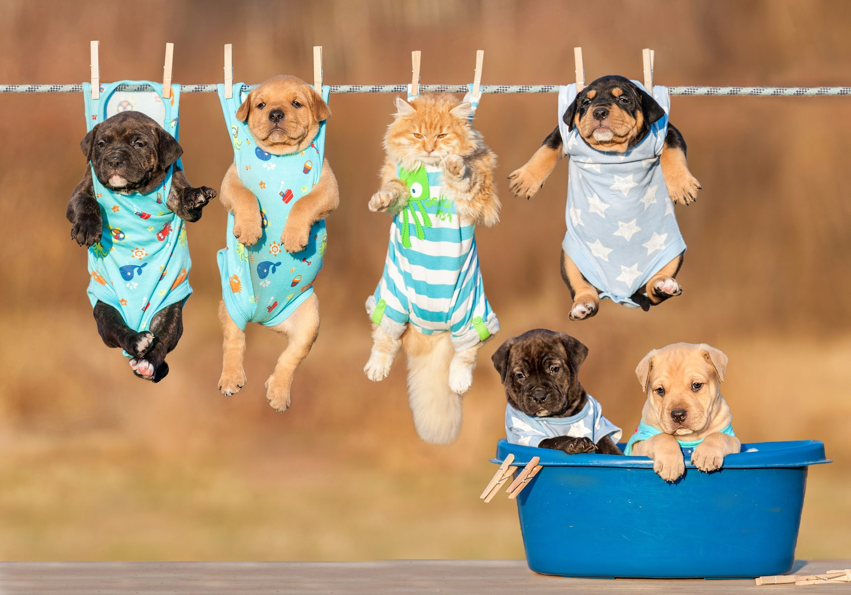 Puppies hanging Web-min